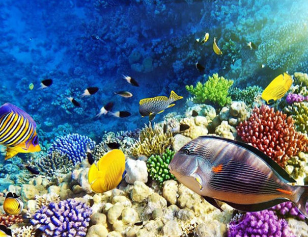 Escursione Barriera corallina Sharm el Sheikh