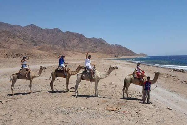 Escursione cammellata sharm deserto