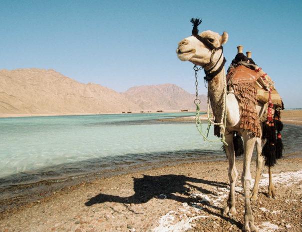 Cammellata a Sharm