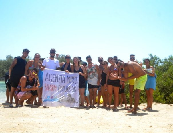 mangrovie gruppo